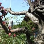 梅にとまる擬似小鳥